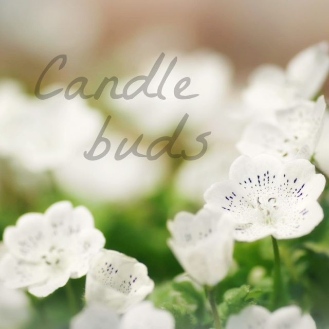 Candle buds