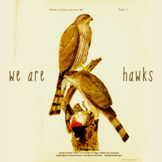 we are hawks (brownham mix)