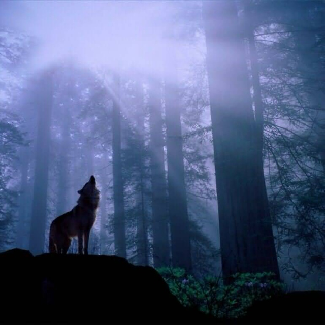 Wolf looked up to the sky
