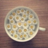 sunshine in your teacup