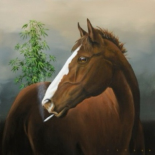 Get Off Your High Horse