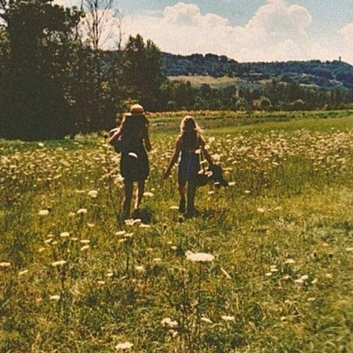 a day in the meadow