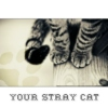 Your Stray Cat