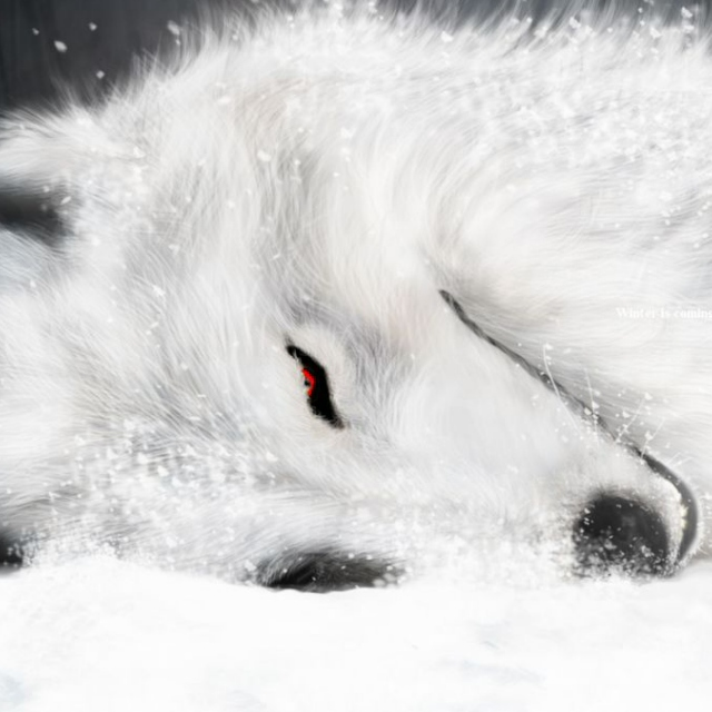Blood of a Wolf