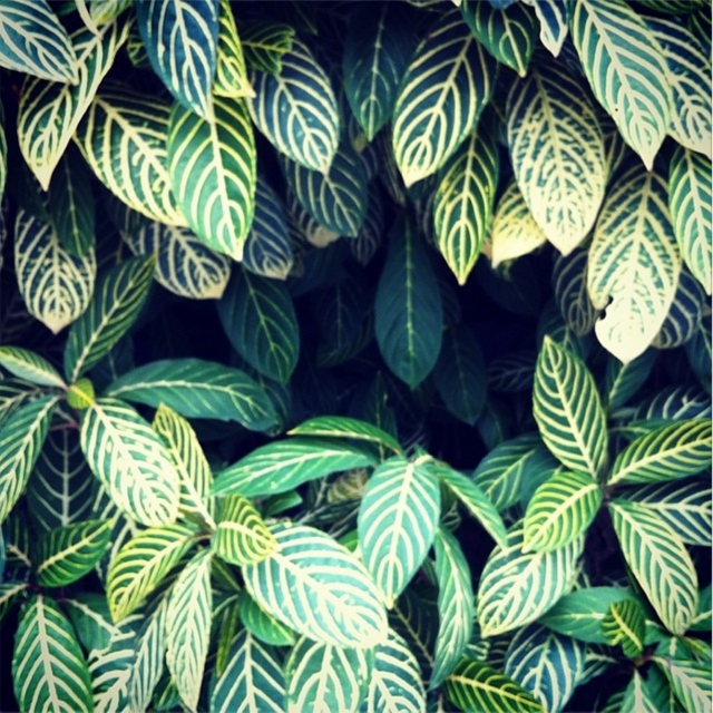 Chilleaves.
