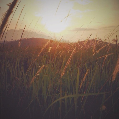 as the sun shines over the grassy hillside