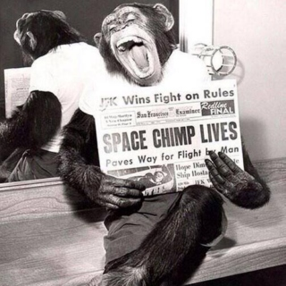 Space Chimp Lives!