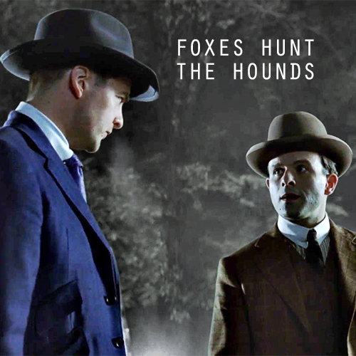 foxes hunt the hounds