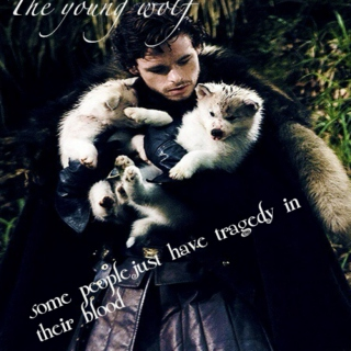 the young wolf
