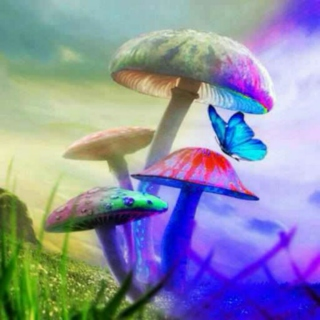 Summer, Psilocybin, & Smiles