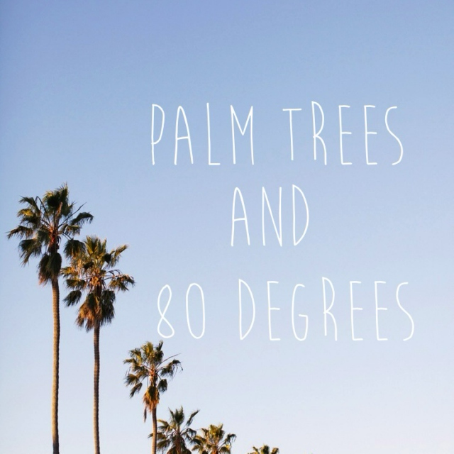 Palm Trees and 80 Degrees