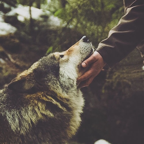 Me, My Wolf & Our Blue Moon Forest