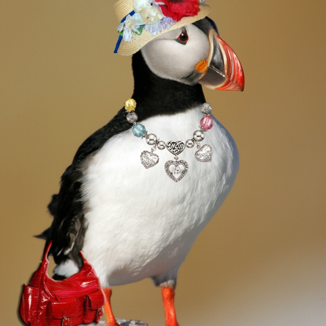 the one true puffin