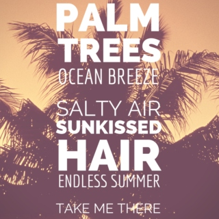 PALM TREES & OCEAN BREEZE