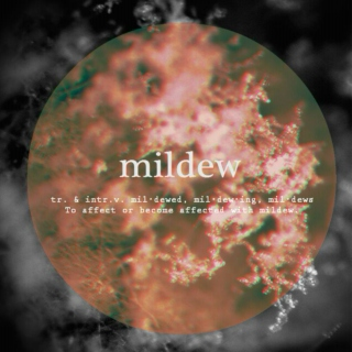 mildew /tr. verb/: to affect with or as if with mildew (alternatively titled i have a crush on you, you bastard)