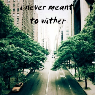 i never meant to wither