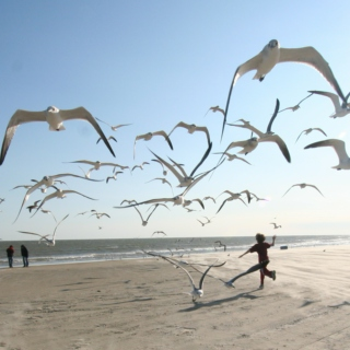 Feed the seagulls