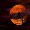 Strange Moon Rising - A Southern Gothic Mix