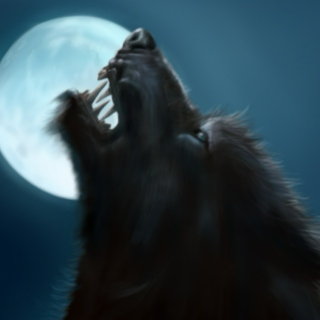 Howling under the moon