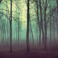 Shivering Forest; Quivering Darkness