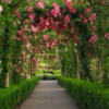 Into the Rose Garden