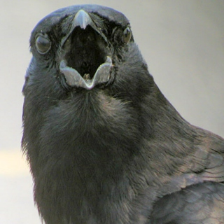 Raven of Thought