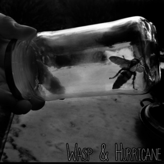 wasp & hurricane