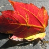 The Return of the Falling Leaves...
