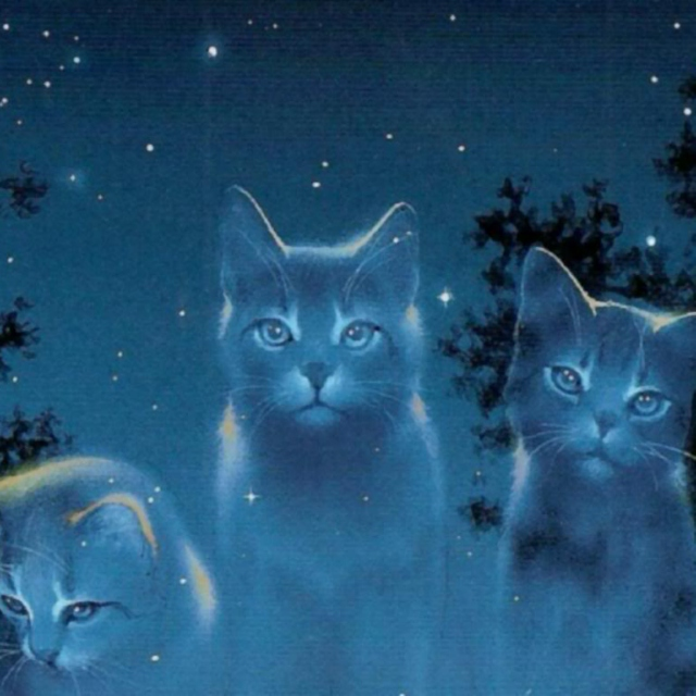 Safe And Sound Warrior Cats