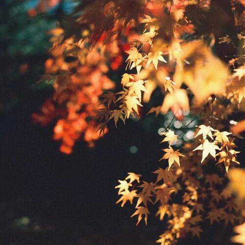 As the Leaves Fall