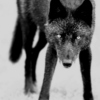 Wolf-Mother