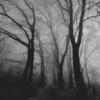 I am a forest and a night of dark trees
