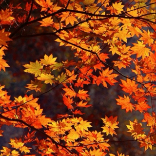 Autumn Is Here, Indie-d