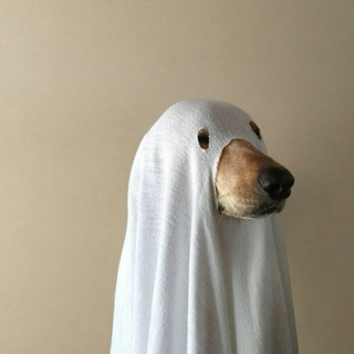 a very spooky playlist