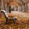Fallen Leaves, Lifted Hearts