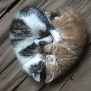 Chill out and Cuddle
