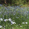 forget me nots; second thoughts