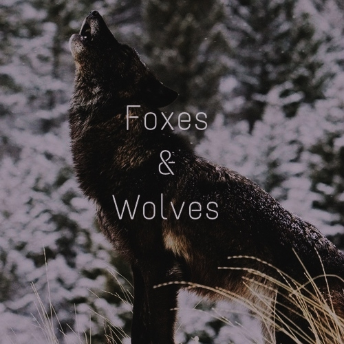 Foxes & Wolves