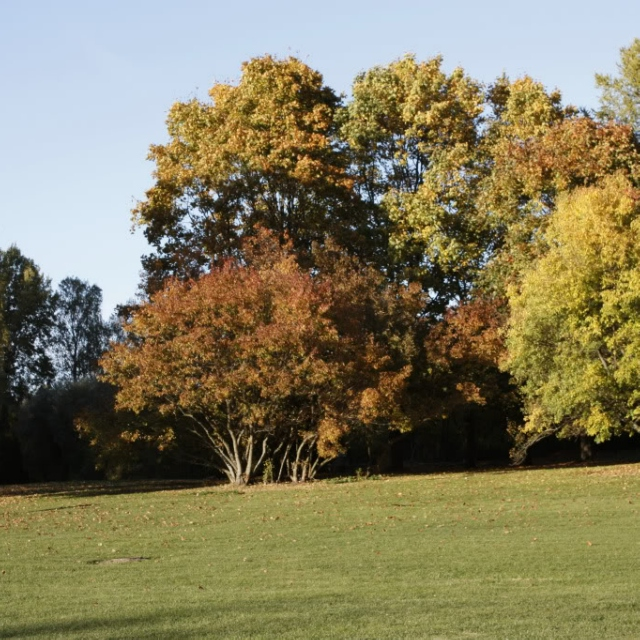 Woodlands and oak trees