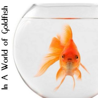 In A World Of Goldfish