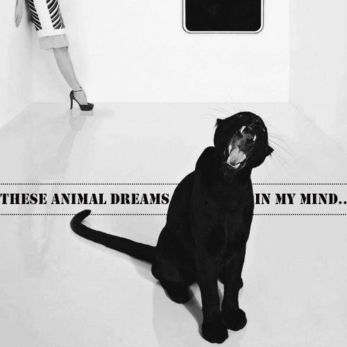 These Animal Dreams