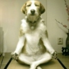 Meditating with dubstep...