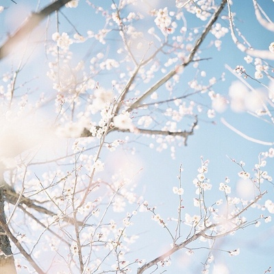 。: *゚✲ฺ The Sakura of My Life 。: *゚✲ฺ