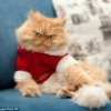 cool cat christmas