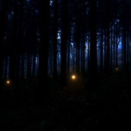 Lights in a misty forest