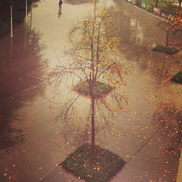 rainy day gaze