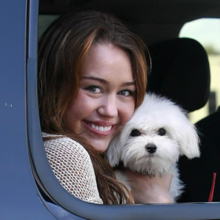 Miley Cyrus - Puppy Shuck