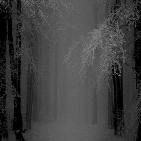 Shadow of Forest