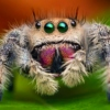 Funky jumping spider