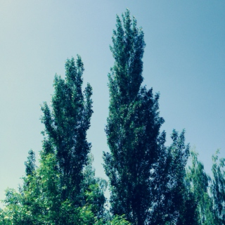 songs for two poplars